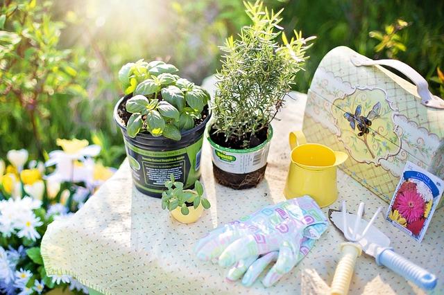 pěstování bylinek